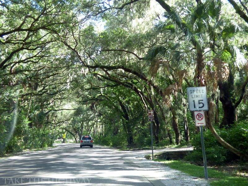 Tree-canopied section of the main park road.